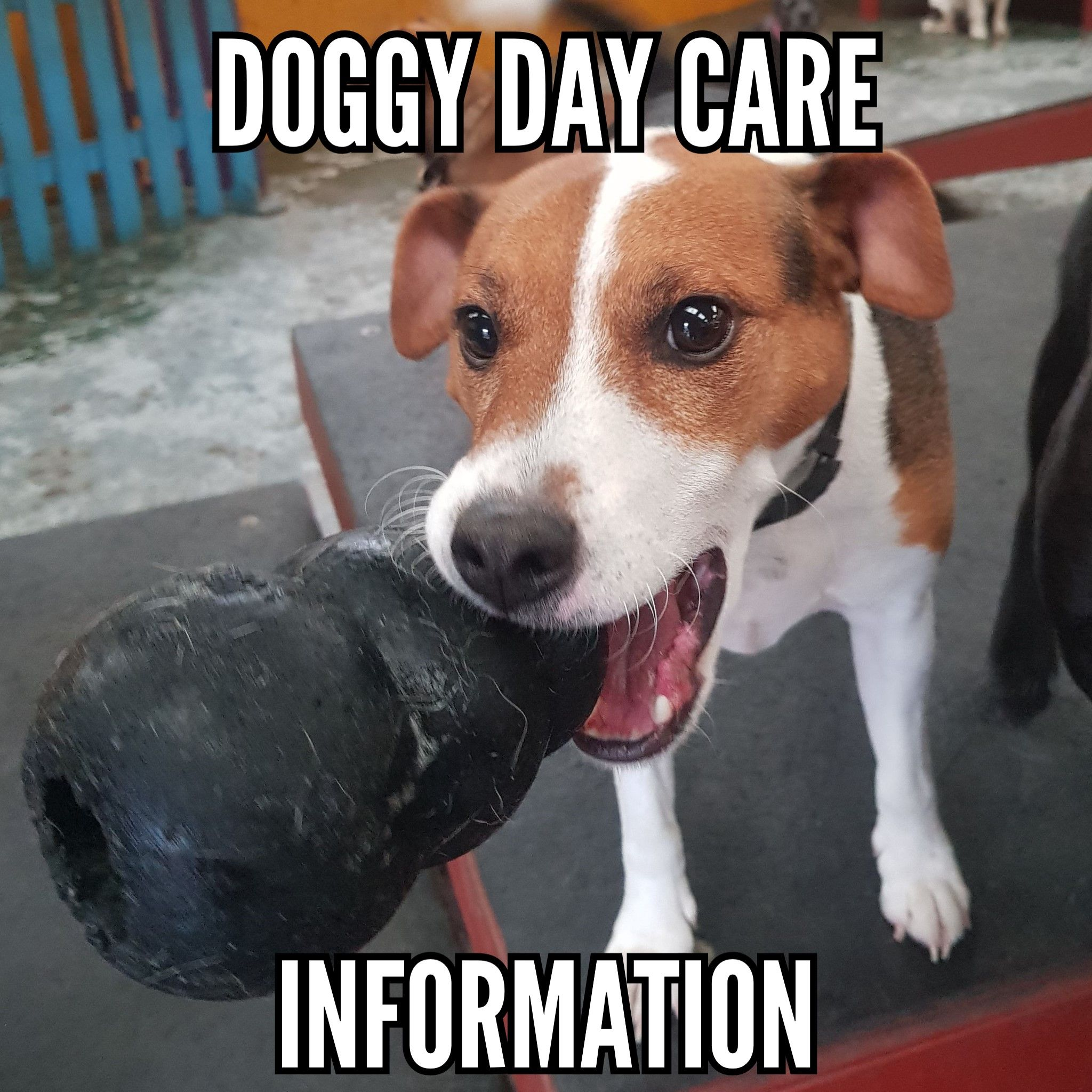 information on our doggy day care services at scoobys doggy day care northampton, a great alternative to dog walking, dog sitting or kennels