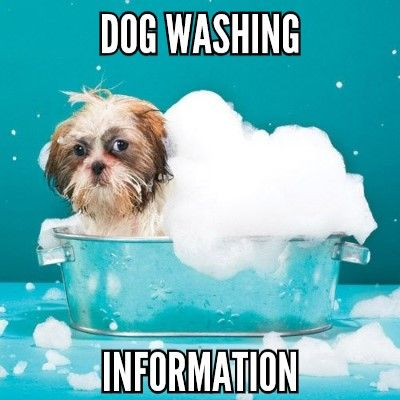 information on our dog washing services at scoobys doggy day care northampton, a great alternative to a full grooming service