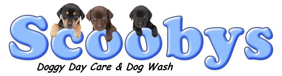 welcome to scoobys doggy day care & dog wash Northampton